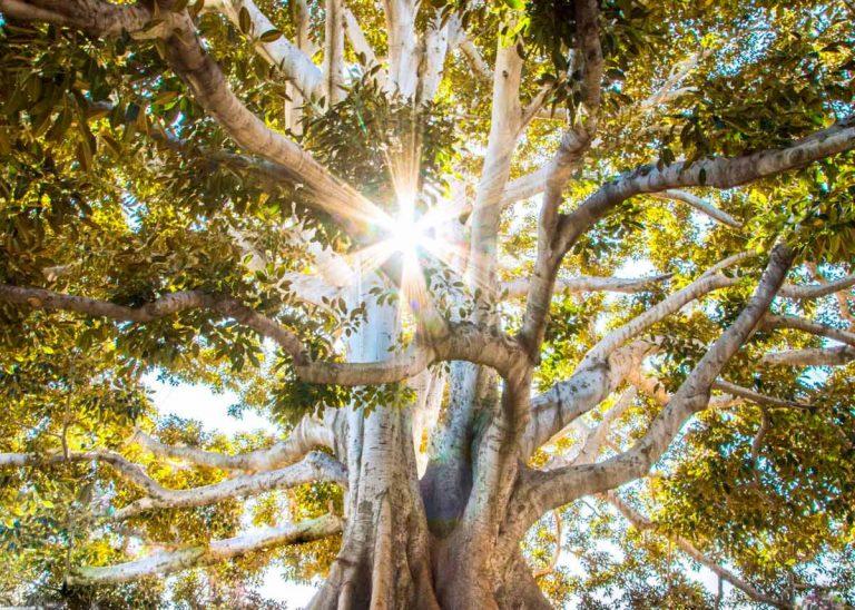El árbol genealógico en Descodificación Biológica