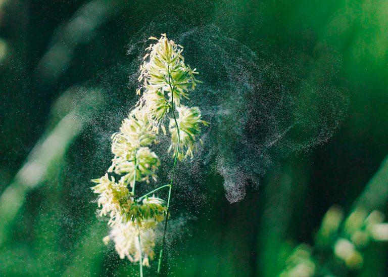 Descodificación Biológica de las alergias
