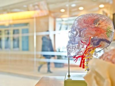 ¿Qué es la Neuro-plasticidad Cerebral?