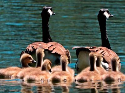 Entendiendo, respetando…transformando el sistema familiar