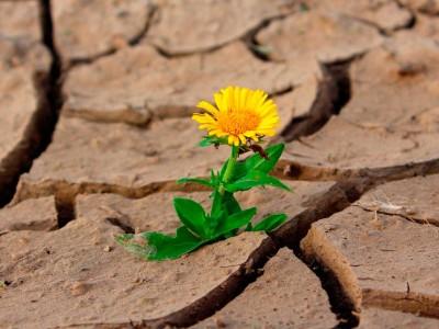 Conflictos emocionales que pueden interferir en la infertilidad