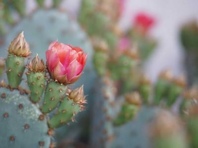 Resiliencia: relaciones, cuidadores y seguridad